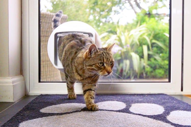 Connect : enfin une chatière connectée pour surveiller les minous