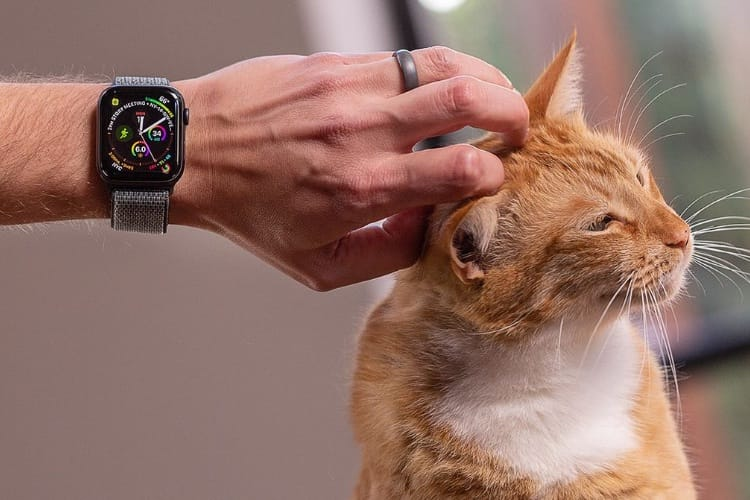 Revue de tests de l'Apple Watch Series 4 : l'expression de la maturité